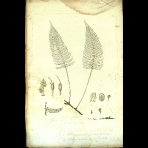 Botanical Engravings of A. Poiret